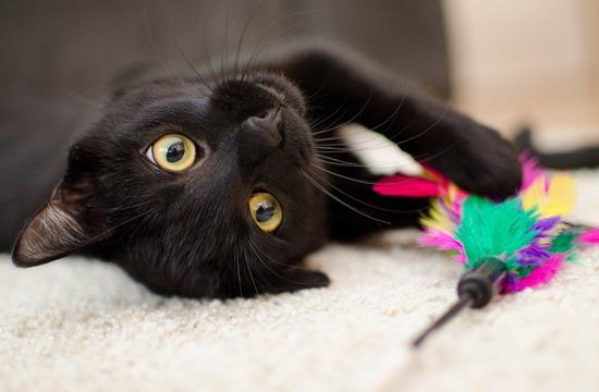 黒猫cat-3040345_1920